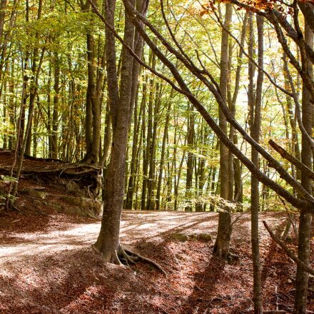 forest, trees, nature, Canon EOS 70D