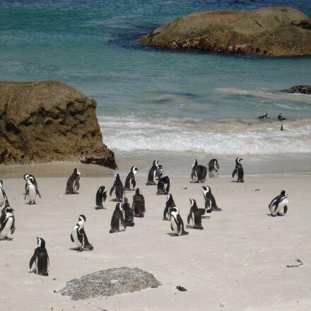 penguins, sand, ocean, Sony DSC-N1