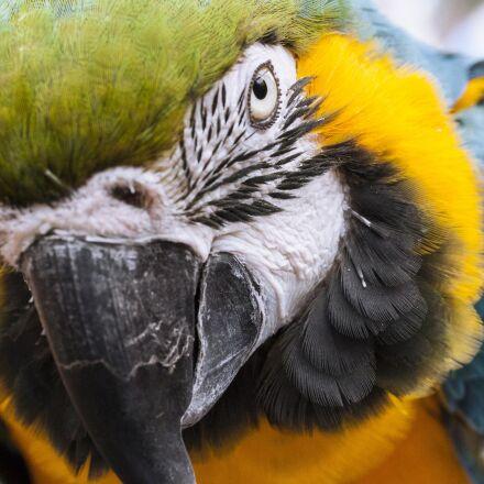 animal, parrot, bird, Canon EOS 40D