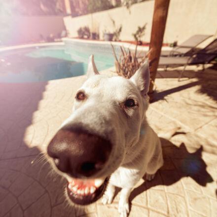 animal, dog, pet, snout, Nikon D800
