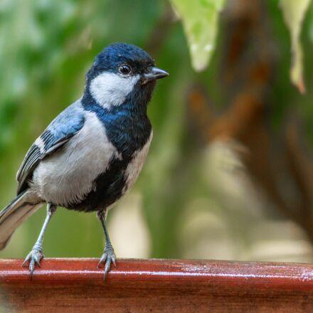 nature, bird, animal, Canon EOS 7D MARK II