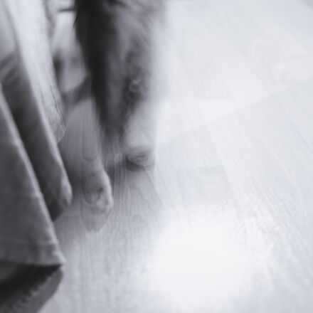 cat, fun, ghost, pet, Canon EOS 6D