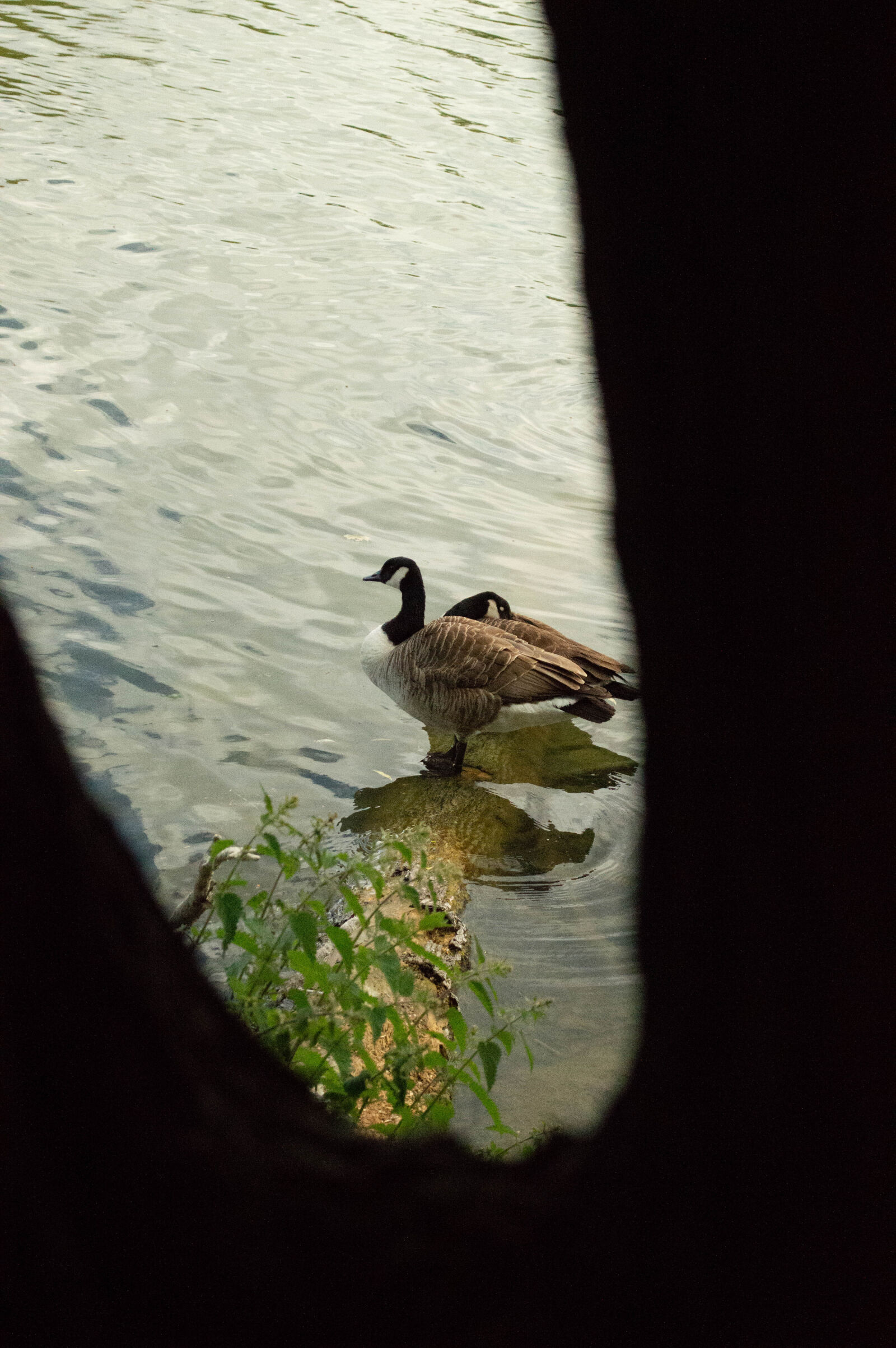 "Nikon D3200 sample photo. ""Duck"" photography"