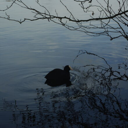 bird, firstphoto, pond, wildlife, Pentax K200D