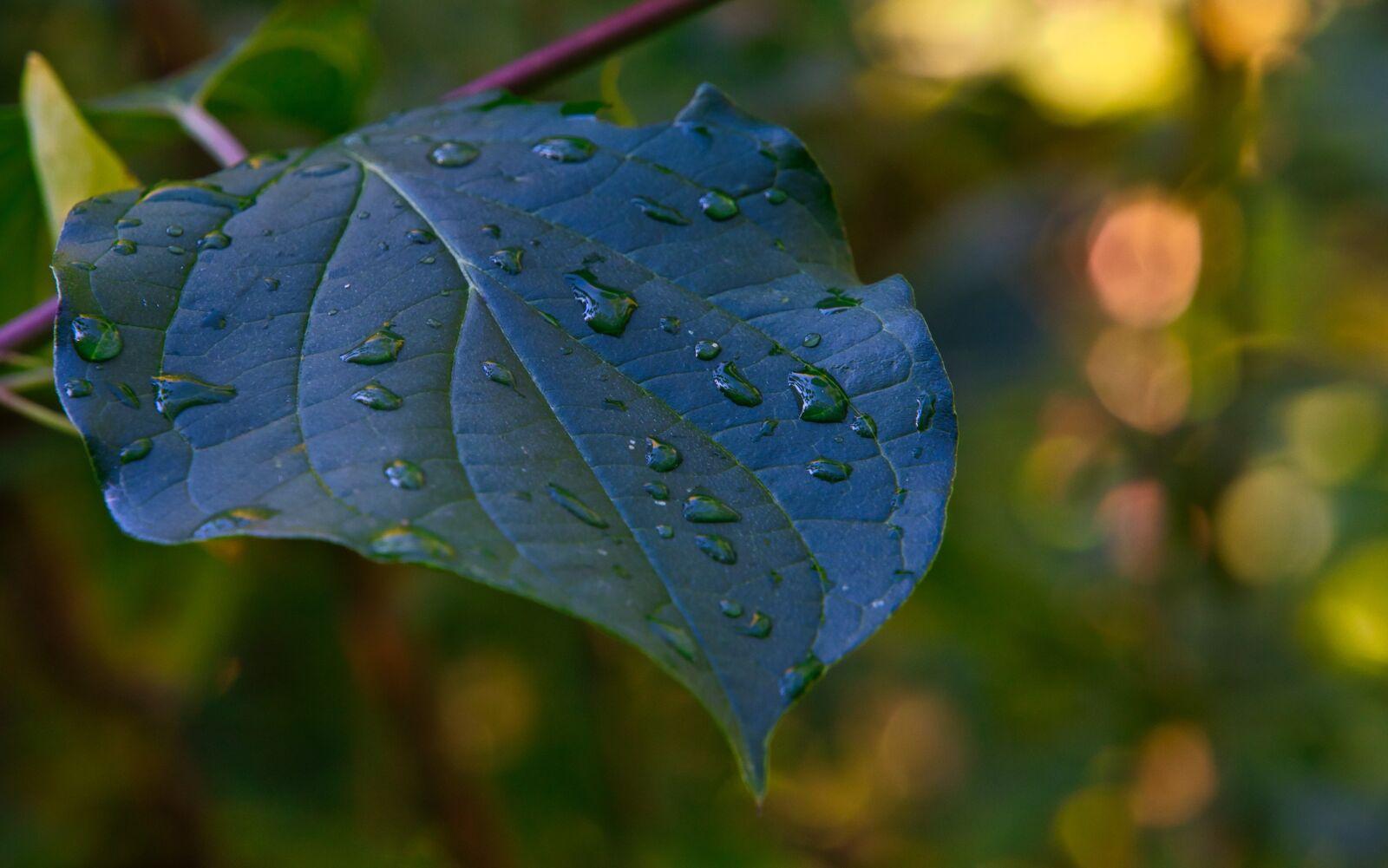 """Sony a6400 sample photo. """"Leaf, autumn, rain"""" photography"""