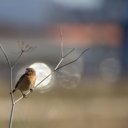 bird, nature, photography, Canon EOS 6D