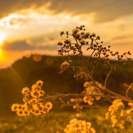 white, petaled, flowers, at, Nikon D3200