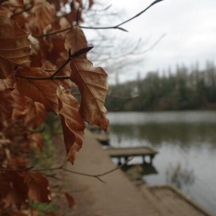 leaves, nature, Pentax K200D