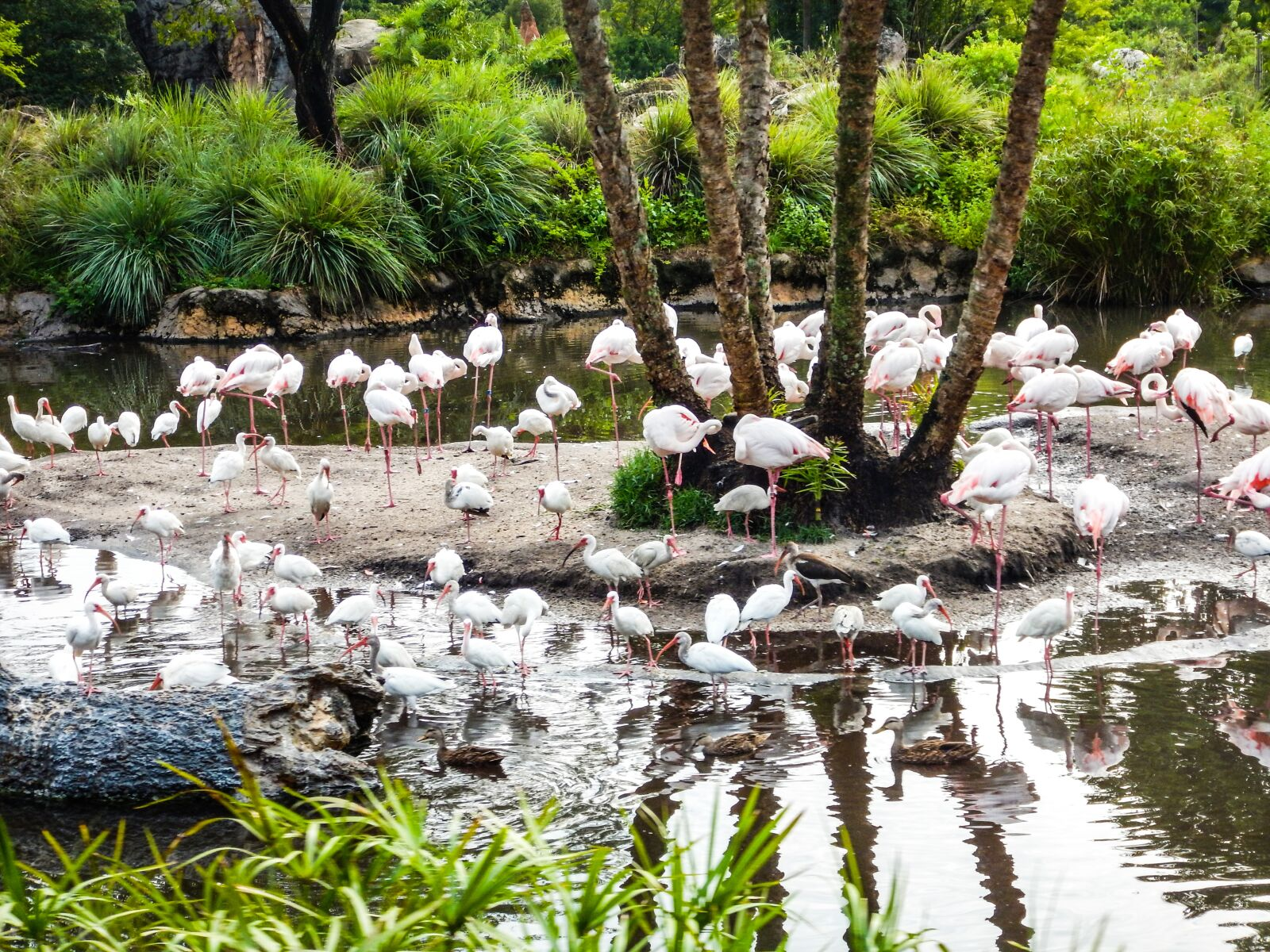 "Nikon Coolpix AW120 sample photo. ""Ave, birds, lake"" photography"