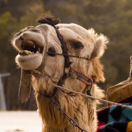 amimal, animals, arab, arabic, Sony DSLR-A230