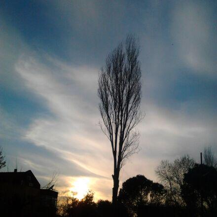 sky, virgo, tree, Samsung GT-S5253