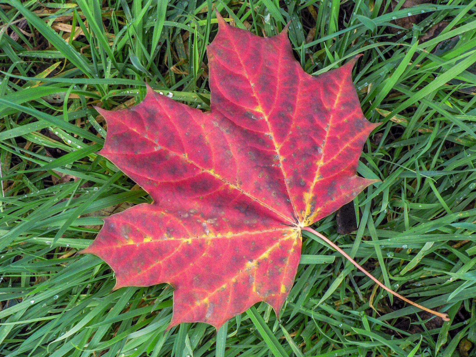 leaf, nature, autumn