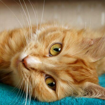 freckle, cat, redhead, Sony SLT-A65