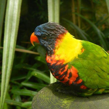 bird, guadeloupe, tropical, Nikon COOLPIX AW100