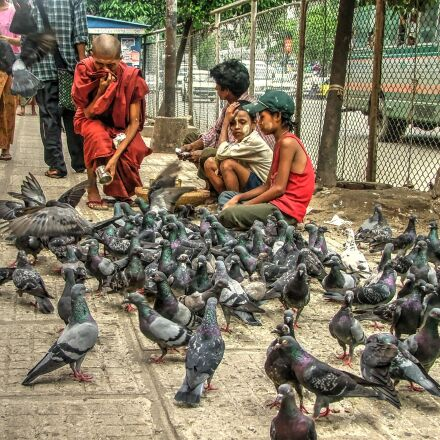 pigeons, burma, monk, Fujifilm FinePix S5000
