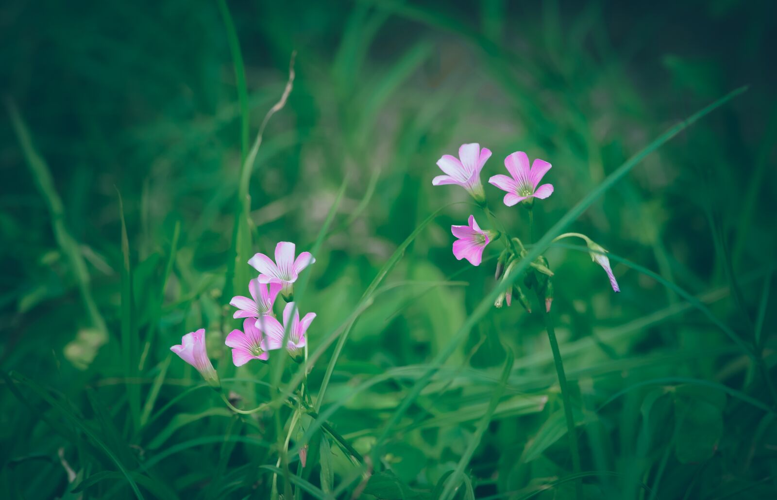 """Nikon D700 sample photo. """"Flower, violet, blooming"""" photography"""