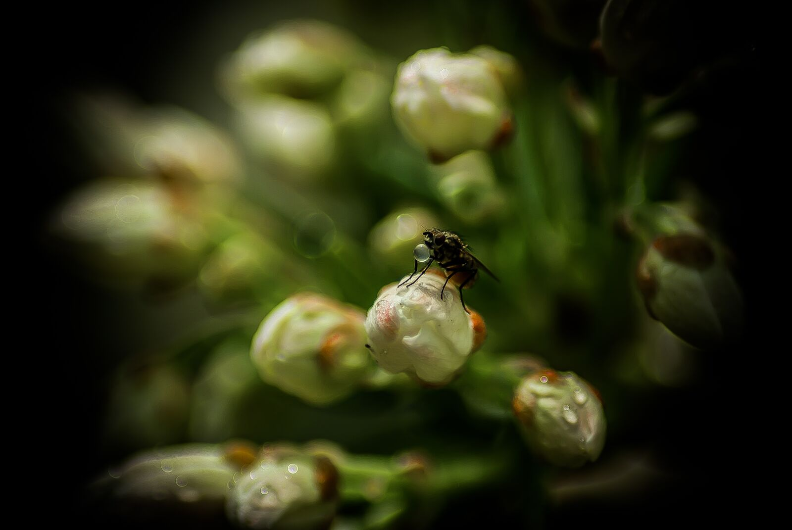 "Pentax K10D sample photo. ""Fly, drop, plants"" photography"
