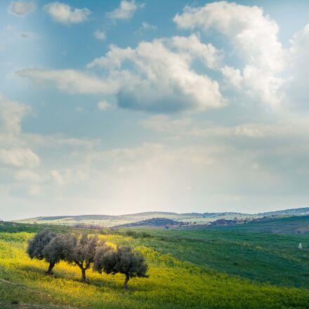 nature, green, landscape, Canon EOS 7D