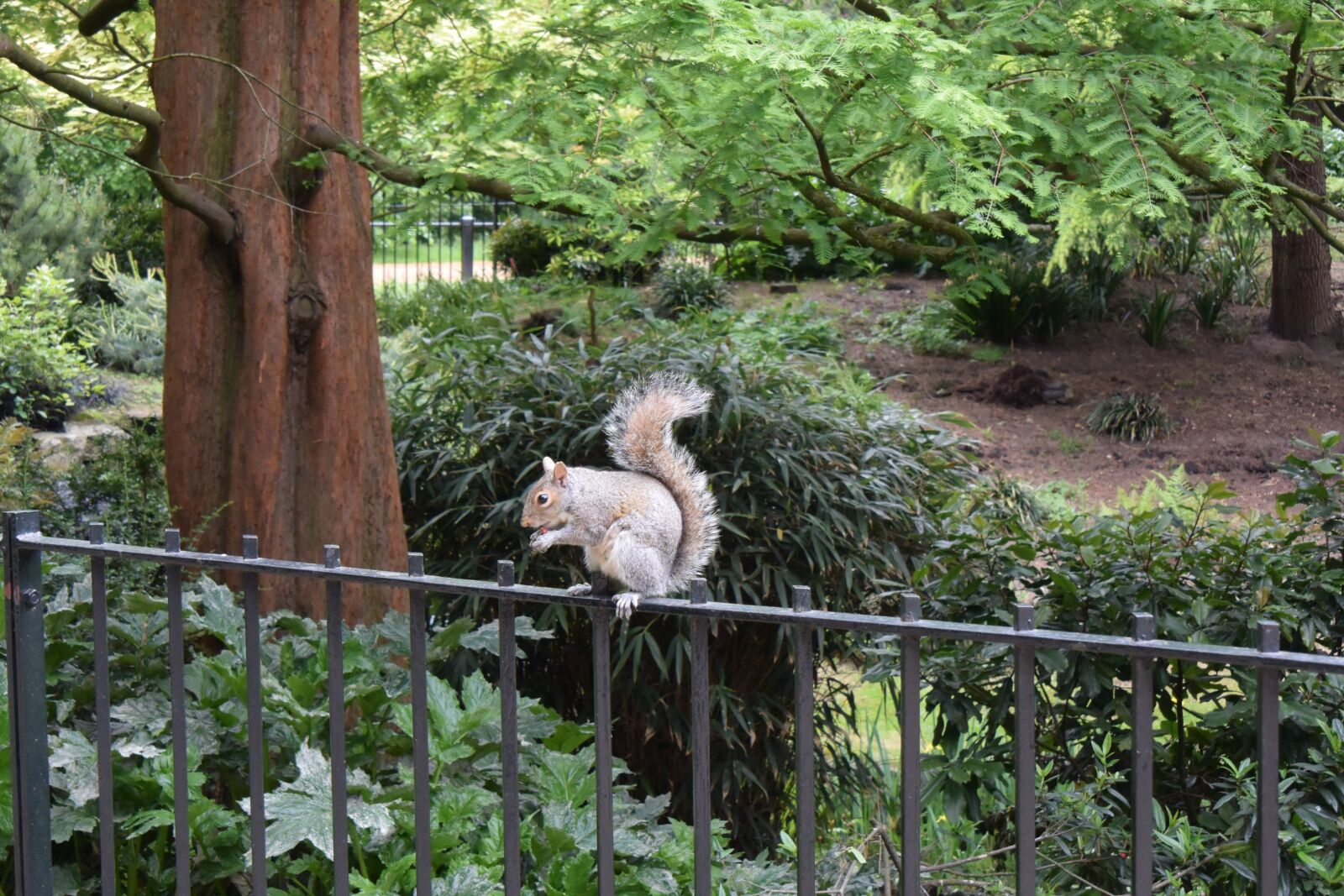 squirrel, hyde park, london photography