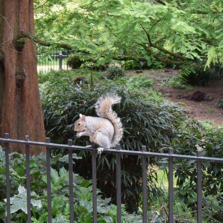 squirrel, hyde park, london, Nikon 1 J4