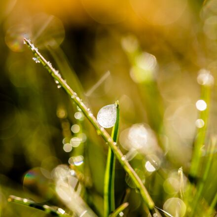 frozen dew drops, dewdrop, Canon EOS 750D