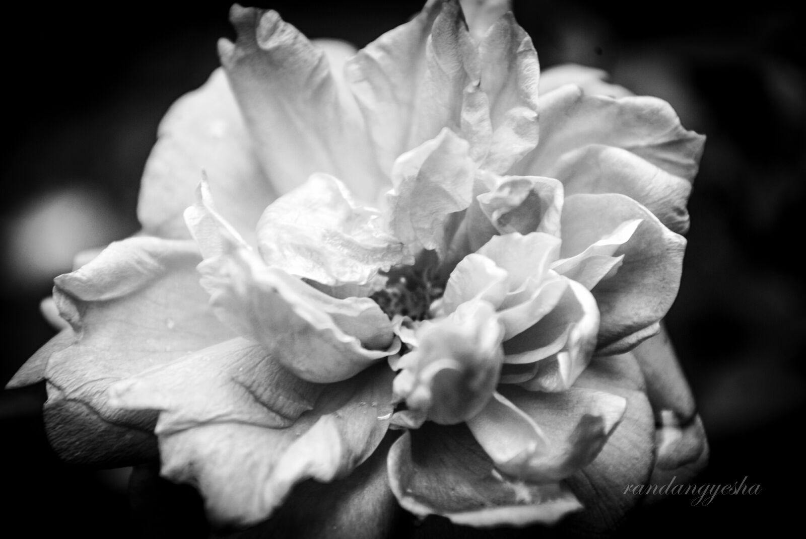 "Nikon D3000 sample photo. ""Black, and, white"" photography"