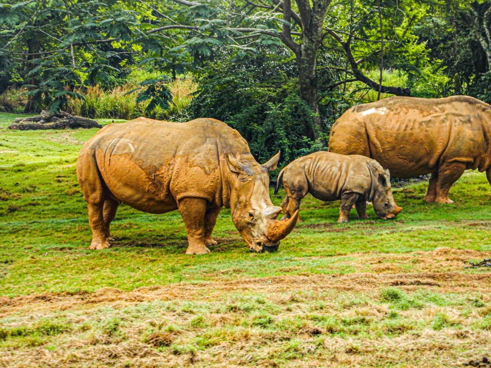 "Nikon Coolpix AW120 sample photo. ""Rhino, family, three"" photography"