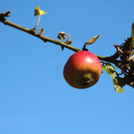 apple, branch, sky, Canon EOS 700D
