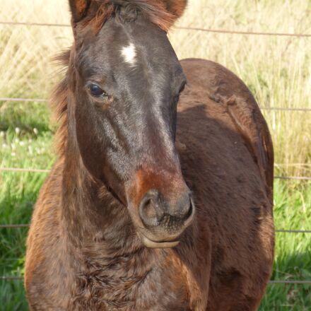 horses, quarter mile, equine, Panasonic DMC-FZ60
