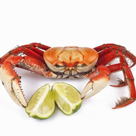siri, crab, lemon, Canon EOS 5D MARK II