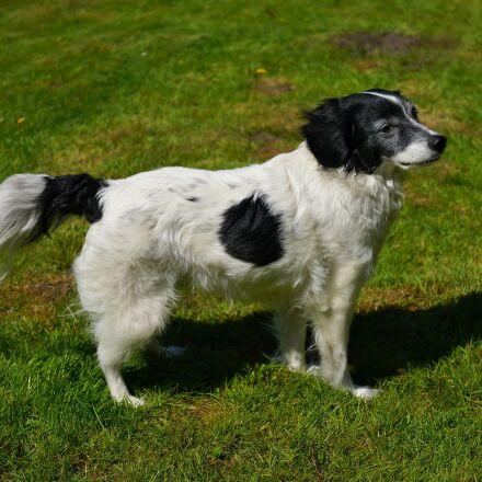 dog, male, hybrid, Sony SLT-A99V