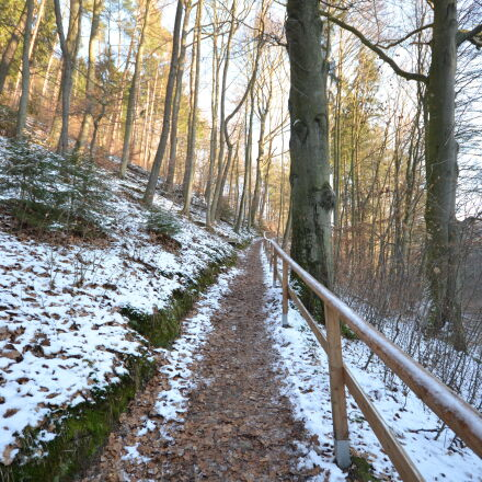 cold, forest, railings, trees, Nikon D3100