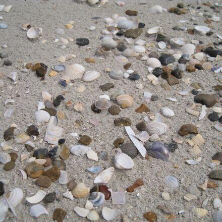 seashells, summer, sol, Canon DIGITAL IXUS 960 IS