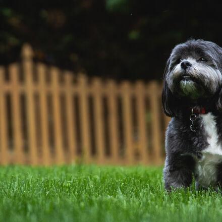 backyard, dog, home, Canon EOS 60D
