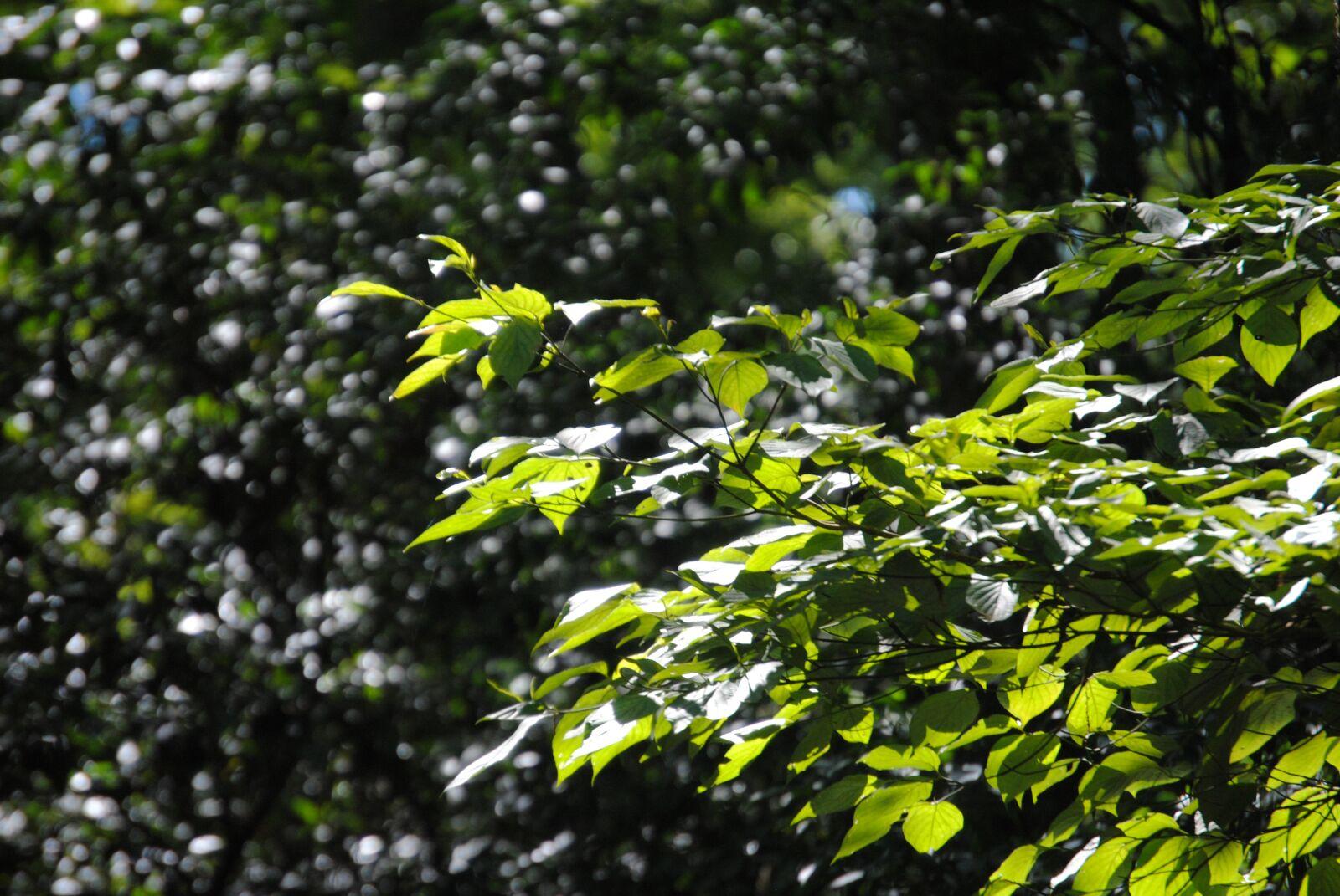 "Nikon D3000 sample photo. ""Green, bush, leaves"" photography"