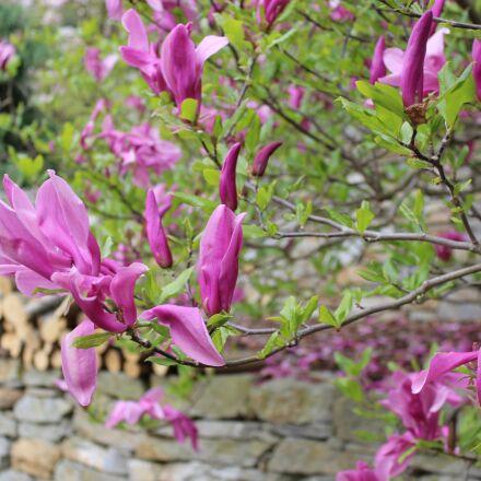 secret garden, sopron hungary, Canon EOS 1300D