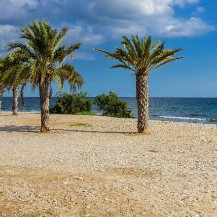 nature, beach, palm trees, Sony ILCE-6000