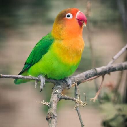 bird, zoo, Sony SLT-A58