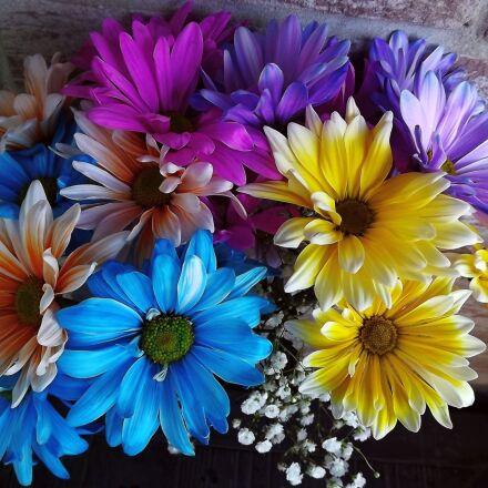 plants, flowers, bouquet, Fujifilm FinePix S3400