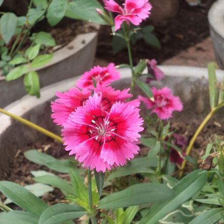 cold, flowerpot, flowers, green, Sony DSC-W520