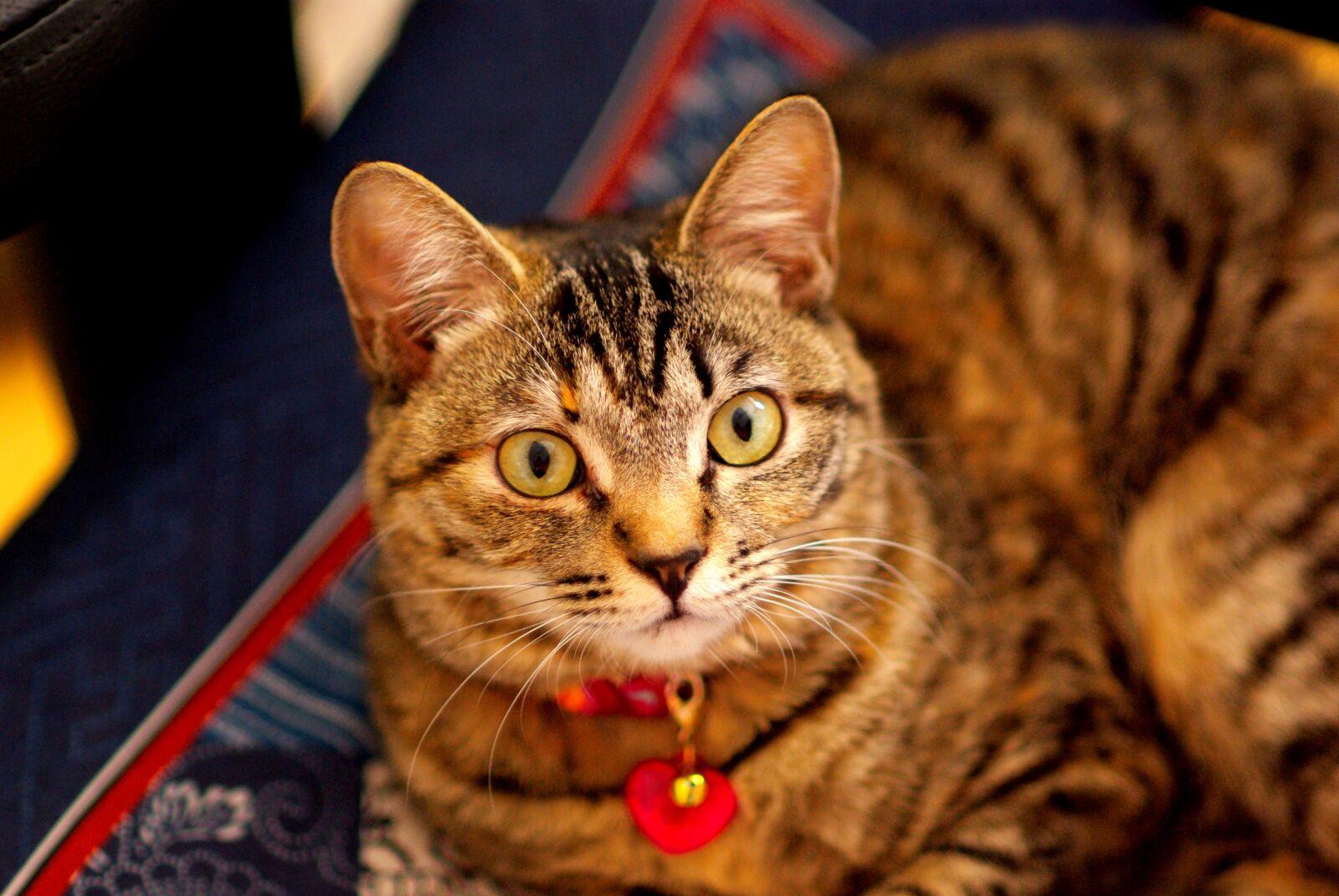 """Pentax K10D sample photo. """"Cat, animal, pet"""" photography"""