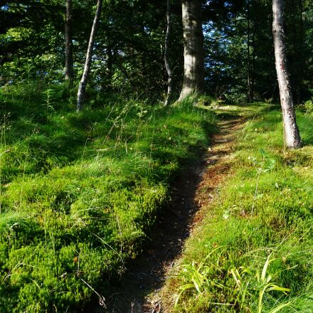 forest path, green, nature, Sony NEX-6