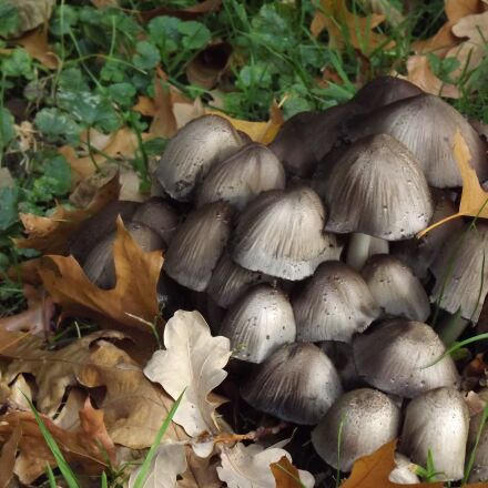 screen mushrooms, mushrooms, forest, Fujifilm FinePix S4080