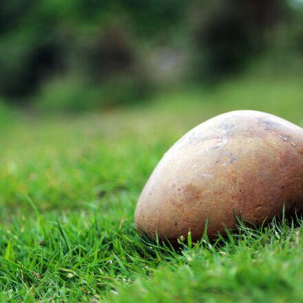 grass, green, nature, Canon EOS 1100D