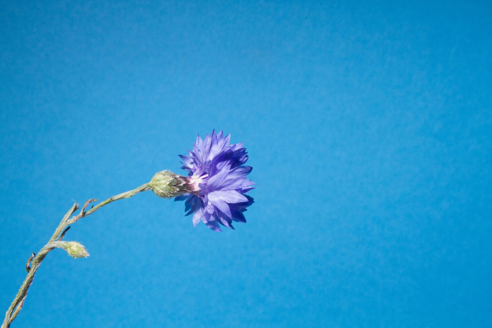 """Canon EOS 7D sample photo. """"Flower, nature, spring"""" photography"""