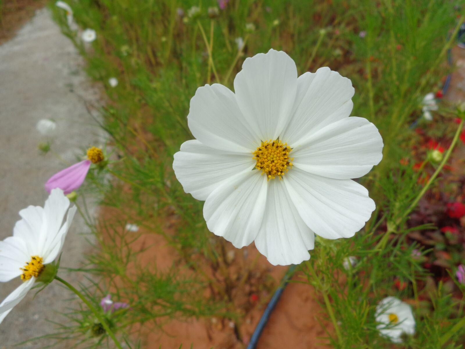 "Sony DSC-W690 sample photo. ""White, flower, vietnam"" photography"