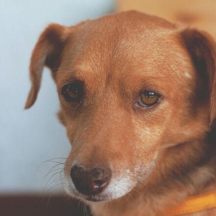 animal, dog, sweet, small, Canon EOS 70D