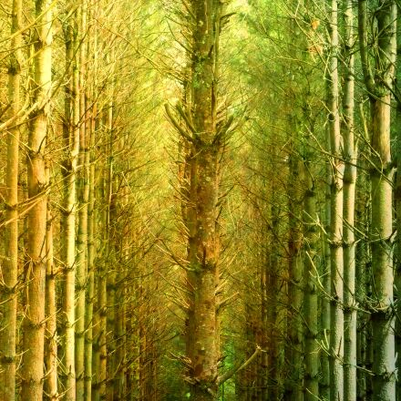 forest, mystical, nature, Panasonic DMC-ZS3