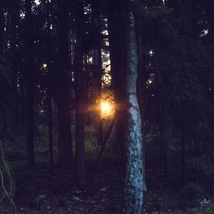 dawn, nature, sunset, sun, Canon EOS 5D MARK III