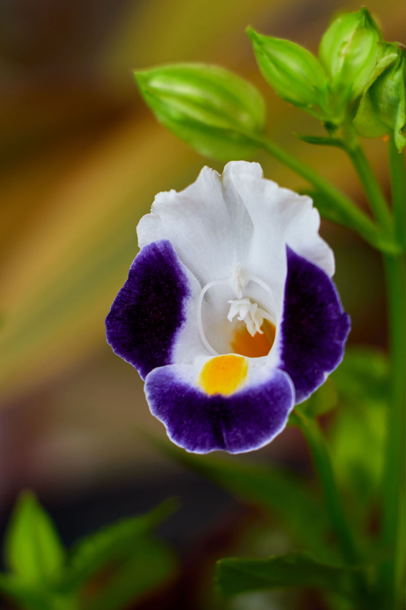 """Canon EOS 70D sample photo. """"Flowers, petals, leaves"""" photography"""